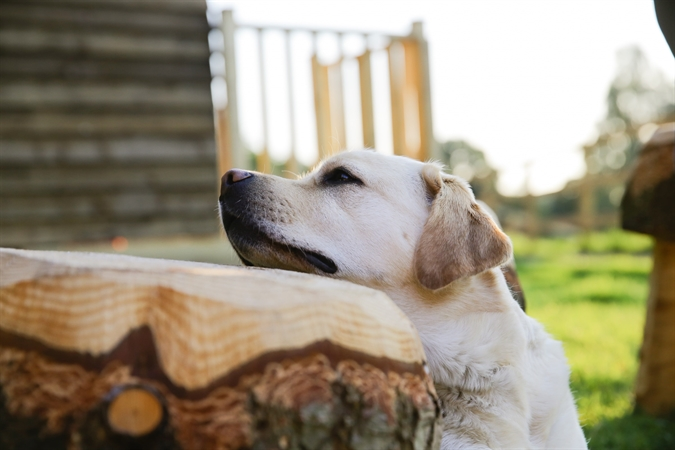 Dog friendly wigwams available