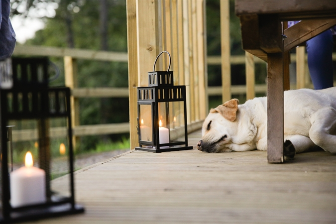 Pet-friendly Glamping Holidays - Wigwam® Holidays Brampton
