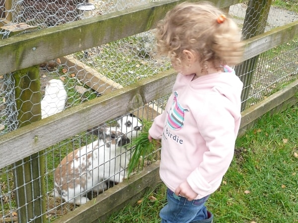 Feeding the rabbits
