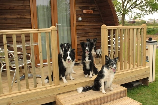 Wallsend Wigwams are dog friendly