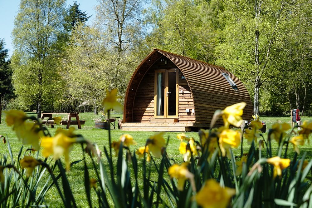 Cabin by the daffodils