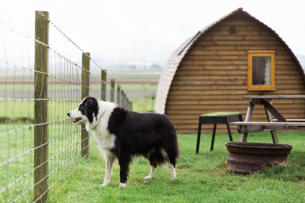 Milly on a dog friendly glamping holiday